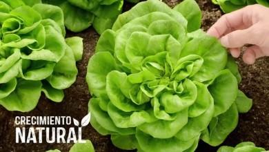 Florette – Crecimiento natural